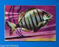 ANIMALI - Lampo 1964 - Figurina-Sticker n. 299 - ORATA -New
