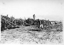 "Photo 1924 Oahu Hawaii ""Filipinos Loading Cane"""