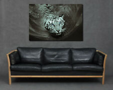 White Snow Tiger Swimming Water Blue Eyes Face Print Canvas Art Living Room Grey