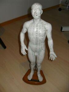 Akupunkturmodell männlich aus China. Aukupunkturpunkte.