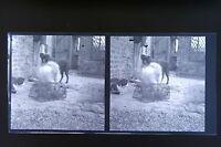 Il Gatto Il Cane E Topo Foto Stereo Negativo Su Film Morbido 1911