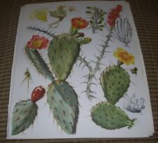 Botanical Print lot of 10 Cactus Cacti Floral Art