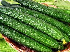 Cucumber Seed 100 Seeds Cucumbers Cuke Cucumis Sativus Organic Bulk Seeds