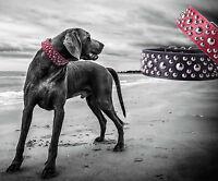 Hundehalsband Halsband Nietenhalsband Hunde Lederhalsband breit groß Leder