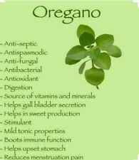 Oregano-300 Seeds -Non GMO-Open Pollinated- Organic
