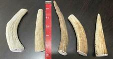 5 Elk Antler DOG Chews Small Animals Crafts Jewelry Knife NATURAL Shed  FRESH