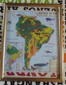Décoration Murale,Set de Table 42 x 30 Amérique du Sud Perroquet Condor Vampire