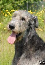 Irish Wolfhound A6 Blank Card No 4 By Starprint