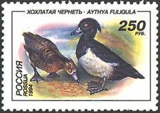RUSSIA - 1994 - Ducks - Tufted Duck (Aythya fuligula) - MNH Stamp - #6079