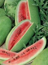 Watermelon Charleston Gray Seeds organic seeds non-GMO seeds Ukraine 3 g