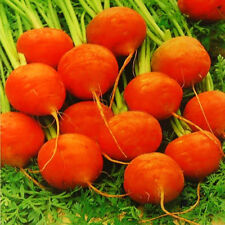 Mini Carrots Seeds 20 Seeds Circular Orange Daucus Carota Vegetables Garden C078