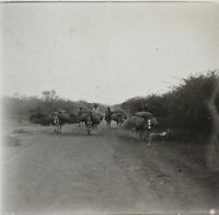 Afrika Foto Q36 Platte Gläser Stereo Positive Vintage Ca 1920