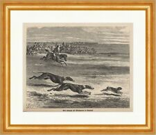 A witch hunt with Greyhounds in England parforcejagd Wood Engraving Hunting Newspaper 0324