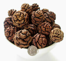 Sequoia Pine Cones 36 Pods Crafts Wreaths Crafting Hobby Holiday Ornament Type 2