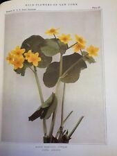 WILD FLOWERS OF NEW YORK,  Part 1/Memoir 15, 2nd Ed.  - H. House/ J.Clarke -1923