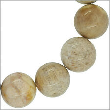 12 Fossilized Coral Round Beads with Flower Pattern 16mm #79017
