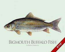 BIGMOUTH BUFFALO FISH PAINTING FISHING ART REAL CANVAS PRINT