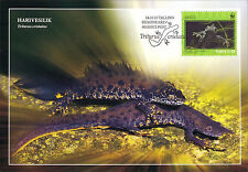 Complete Set 4 maxicards Estonia 2010 Great Crested Newt Wild Life Maximum card