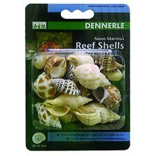 Dennerle Marinus Reef Shells - Sea Snail Decoration & Housing for Hermit Crabs