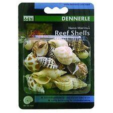 DENNERLE Marinus Reef CONCHIGLIE-MARE LUMACA Decorazione & alloggi per Hermit granchi