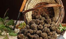 Precious fresh Italian truffles blacks. From Italy.  120grams. 4,2oz T.Uncinatum
