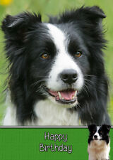 Border Collie Handmade Birthday Card 8x6""