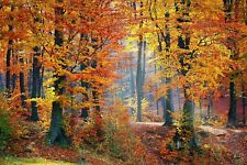 WOODLAND/ FOREST PATH AUTUMN CANVAS PICTURE POSTER PRINT WALL ART UNFRAMED #619