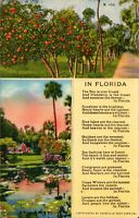 In Florida Multi view vintage  Postcard- *Free Shipping*