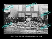 OLD LARGE HISTORIC PHOTO OF HOXIE KANSAS LARGE PILE OF RABBITS AFTER HUNT c1915