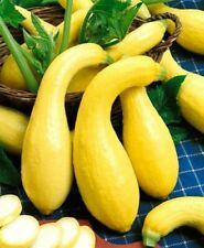 Squash (Crookneck) Garden Vegetable seeds– 1/2 oz prepack (Approx. 75-85 seeds)