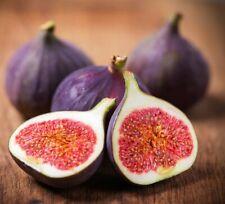 100pcs Fig Dwarf Seeds Fruit Plants Potted Organic Bonsai Home Garden