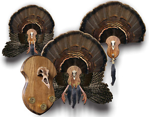 Mountain Mike's Reproductions Ultimate Turkey Mounting Kit, Plaque, Beard, Fan