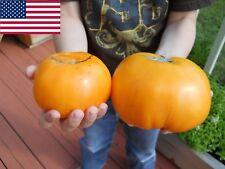 Orange Kentucky Beefsteak Tomato Seeds- Organic- 25+    2018 Seeds