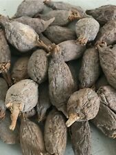 10 pods of Alligator Pepper from Nigeria