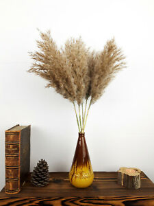 5x Dried Reed Grass Stems, Large Bushy & Fluffy, Pampas Grass Dry, Vase Flowers