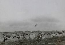Seagulls on Stone Wall, Probably in Italy, Magic Lantern Glass Photo Slide