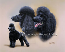 Poodle Multistudy Print by Robert J. May