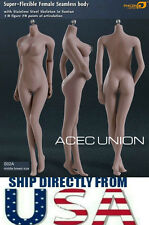 Phicen 1/6 Super Flexible Seamless Body M Bust SUNTAN S02A Steel Skeleton U.S.A.