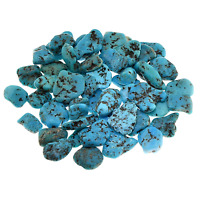 Kingman Turquoise Stabilized Tumbled Stone Qty1 10-14mm B051-2 by Cisco Traders