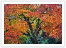 Tarjeta De Saludos Cumpleaños/en Blanco NOTELET-Cobre Haya árbol bosque de otoño