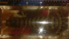 """ZEBRA MANTIS SHRIMP LARGE LIVE 6""""FEMALE SALTWATER -FREE SHIPPING -LIVE DELIVERY"""