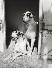 1985 SIEGFRIED & ROY Magicians Great DANES Dogs BRUCE WEBER Photo Gravure 16X20