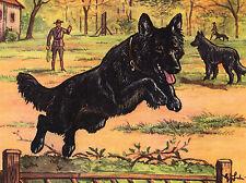 BELGIAN SHEPHERD DOG IN POLICE TRAINING GREAT GREETINGS NOTE CARD