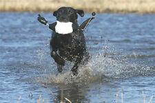 AVERY GREENHEAD GEAR EZ BIRD MALLARD FLASHER DUCK DOG TRAINING DUMMY BUMPER NEW!
