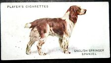English Springer Spaniel  Superb Original 1930's Vintage Card  ## VGC