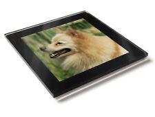 GERMAN SPITZ MITTEL LIGHT Dog Puppy Premium Glass Table Coaster with Gift Box