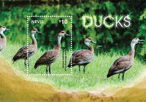 Nevis-2014-Fauna-Birds-Ducks