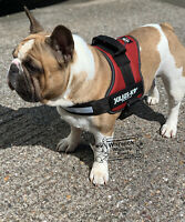 Julius K9 ® Power House Harness Dog Auburn /Chestnut Size  0 ,1, 2, 3 or 4