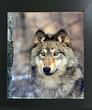 Timber Wolf Wild Eyes Wildlife Animal Art Print Framed Wall Decor Picture 20x24