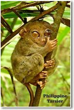 Philippine Tarsier - NEW Animal Wildlife POSTER